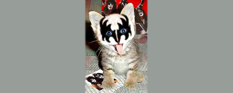 CAT's nine lives of2011
